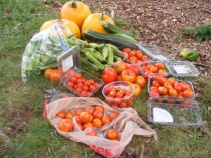 Vegetables from Swannanoa Community Garden